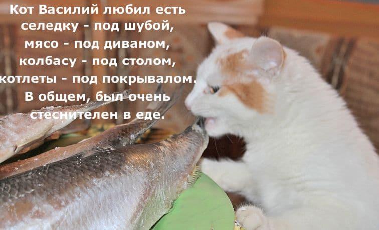 юмор селедка и кот